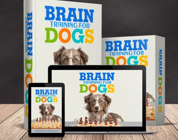 brain training for dogs download