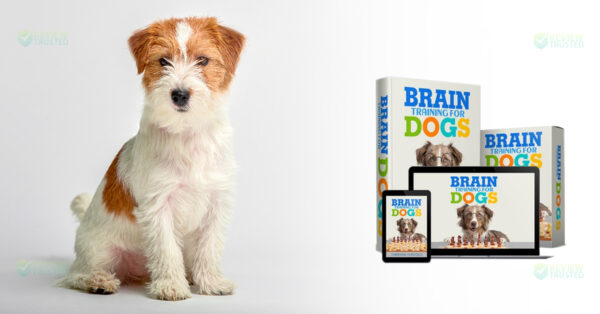 brain training dogs review